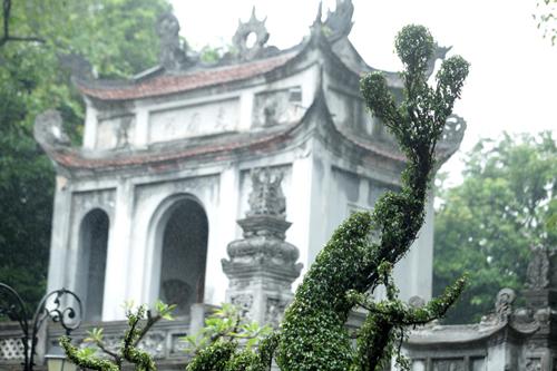 Cận cảnh cặp rồng kết từ cây xanh ở Văn Miếu - Quốc Tử Giám - 10