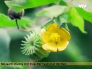 Du lịch - Ngôi làng có hàng trăm cây thuốc quý ở Ba Vì