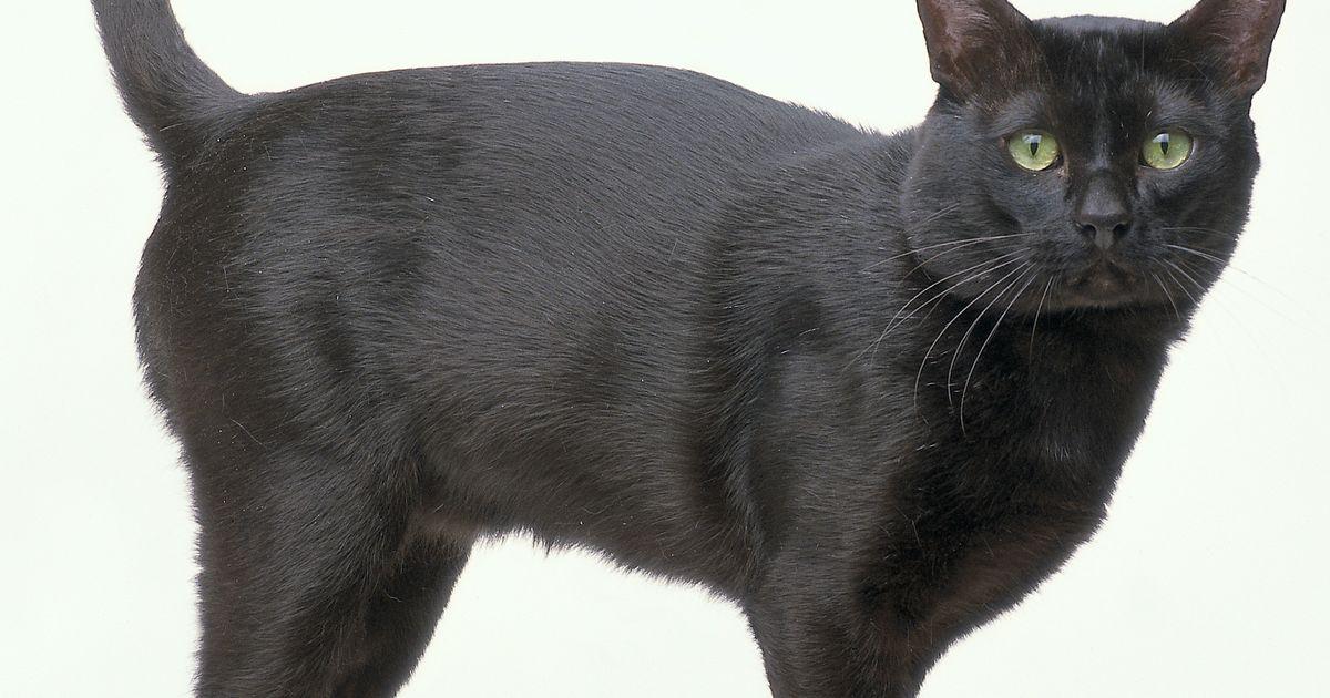 """6 sinh vật đầu mèo thân chuột bị """"nguyền rủa"""" ở Nam Phi - 2"""