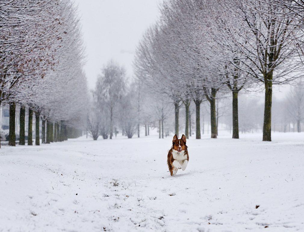 Ảnh: Tuyết buốt giá kì vĩ phủ trắng châu Âu - 1
