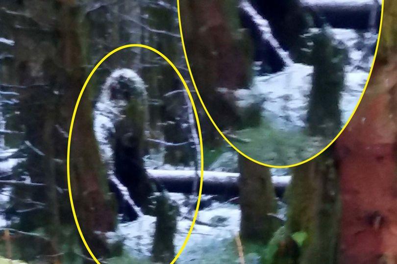 """Phát hiện """"quái vật chân to"""" trong rừng ở Bắc Ailen? - 1"""