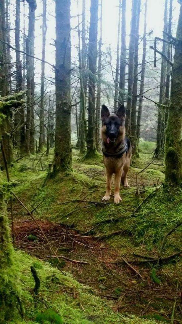 """Phát hiện """"quái vật chân to"""" trong rừng ở Bắc Ailen? - 2"""