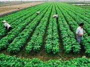 Tài chính - Bất động sản - Nông dân 'bó gối' vì thiếu vốn sản xuất