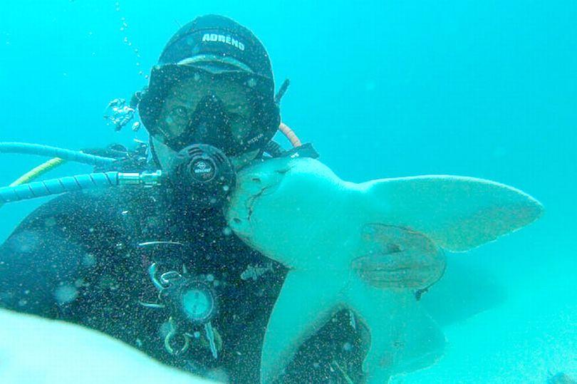 """Úc: Cá mập """"tiền sử"""" rúc vào tay thợ lặn đầy âu yếm - 1"""