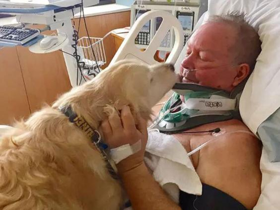 Mỹ: Chó giữ ấm 24 tiếng, cứu mạng chủ giữa trời rét -4 độ - 1