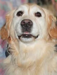 Mỹ: Chó giữ ấm 24 tiếng, cứu mạng chủ giữa trời rét -4 độ - 3