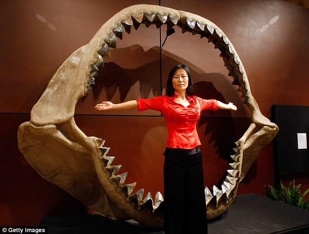 """Lý do tuyệt chủng của loài cá mập """"khủng"""" nhất Trái đất - 3"""