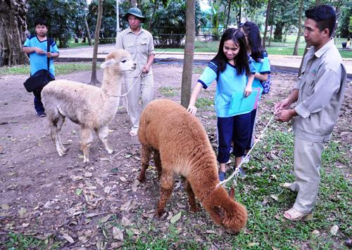 Ngắm lạc đà không bướu lần đầu xuất hiện ở Sài Gòn - 2