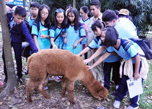 Ngắm lạc đà không bướu lần đầu xuất hiện ở Sài Gòn - 3