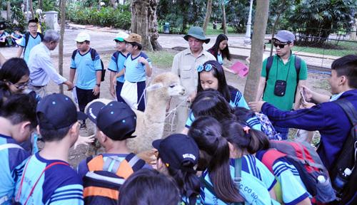 Ngắm lạc đà không bướu lần đầu xuất hiện ở Sài Gòn - 7