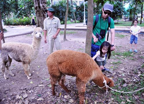 Ngắm lạc đà không bướu lần đầu xuất hiện ở Sài Gòn - 10