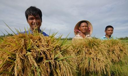 """""""Cởi trói"""" cho xuất khẩu gạo: Mới giải quyết phần ngọn - 1"""