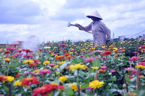 """Ngắm """"bức tranh"""" sắc màu trên những ruộng hoa Tết ở Sài Gòn - 3"""