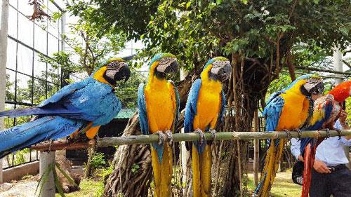 Sở thú bán hoang dã Vườn Xoài - thiên nhiên thu nhỏ đầy sống động - 5