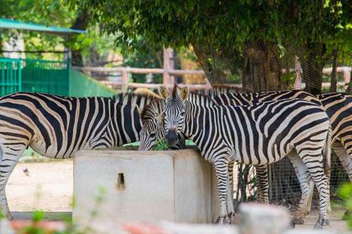 Sở thú bán hoang dã Vườn Xoài - thiên nhiên thu nhỏ đầy sống động - 8