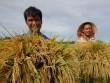 """""""Cởi trói"""" cho xuất khẩu gạo: Mới giải quyết phần ngọn"""