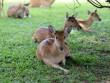 Sở thú bán hoang dã Vườn Xoài - thiên nhiên thu nhỏ đầy sống động