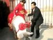 """Cô dâu """"cưỡi"""" lợn hơn 600kg về nhà chồng khiến dân làng náo loạn"""