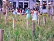 """Ngắm hình ảnh làng quê ở """"phố nhà giàu"""" tại Sài Gòn"""