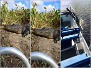 Thế giới - Kinh hãi cá sấu lao lên thuyền du khách nhanh như chớp