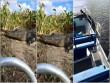 Kinh hãi cá sấu lao lên thuyền du khách nhanh như chớp