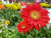 Bộ ảnh hoa xuân khoe sắc chụp bằng camera Galaxy S7 edge