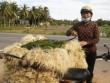 Giá kiệu Tết tăng gấp 3, nông dân vùng lũ phấn khởi đón Xuân