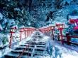 Ngắm Kyoto đẹp như thiên đường mùa đông