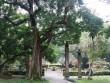 """Chuyện kỳ lạ về những """"cụ cây"""" ở khu di tích Lam Kinh"""