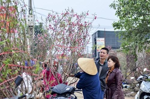 Đào Nhật Tân, quất Tứ Liên tấp nập từ vườn ra chợ - 3