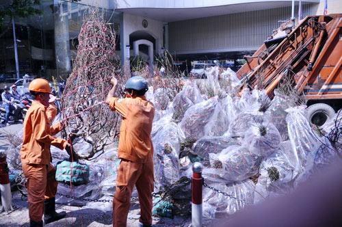 Hàng trăm gốc đào ở SG bị vứt vào xe rác trưa 30 Tết - 1