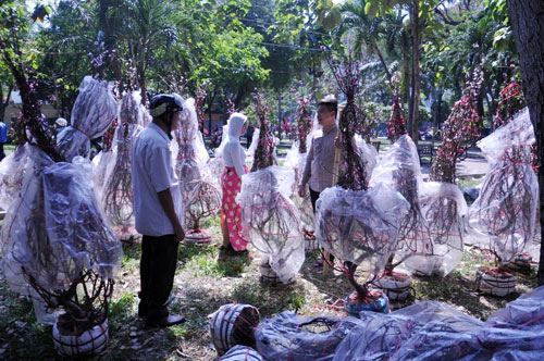 Hàng trăm gốc đào ở SG bị vứt vào xe rác trưa 30 Tết - 2