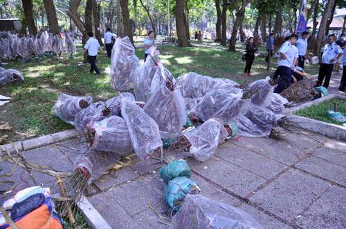 Hàng trăm gốc đào ở SG bị vứt vào xe rác trưa 30 Tết - 9