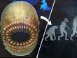 Tổ tiên xa xưa nhất của loài người có miệng cực rộng
