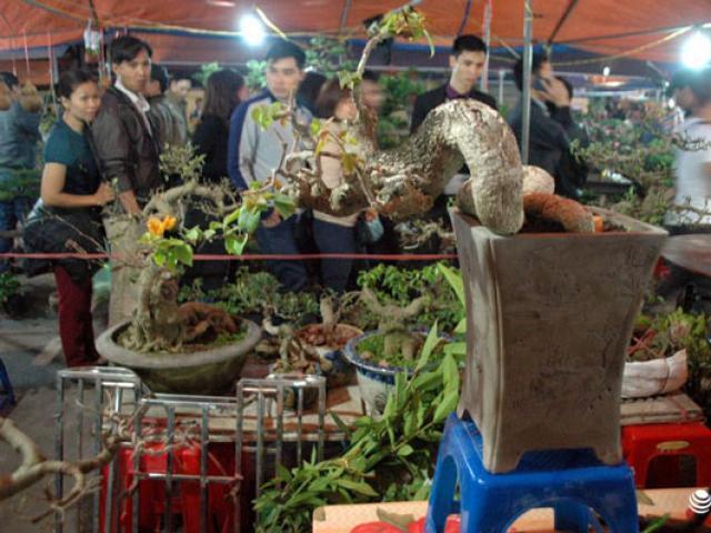 Chợ Viềng Nam định ở đâu: Cây Cảnh độc đáo Giá Bạc Triệu ở Phiên Chợ Bán Rủi Cầu May