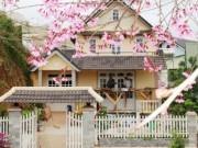 Du lịch - Lâm Đồng bất ngờ hủy lễ hội hoa mai anh đào