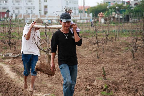 Chưa đến Rằm, nông dân đã tất bật trồng lại đào - 3