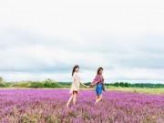 Du lịch - Cánh đồng hoa tím biếc đẹp ngỡ trời Âu ở Đắk Lắk