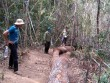 20 lâm tặc dùng súng cướp lại gỗ lậu