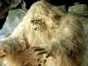 Phi thường - kỳ quặc - Video: Phát hiện sinh vật bí ẩn giống người Tuyết Yeti