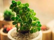 Quiz: 12 con giáp trồng cây gì trong nhà để thu hút tiền bạc?
