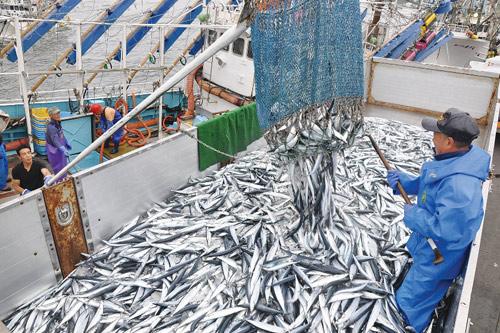 Cá Sanma Nemuro bồi bổ sức khỏe cả gia đình - 2