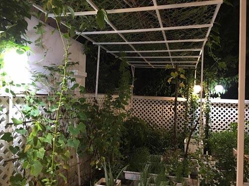 Thủy Tiên chăm được vườn rau 100m2 xanh mát - 4