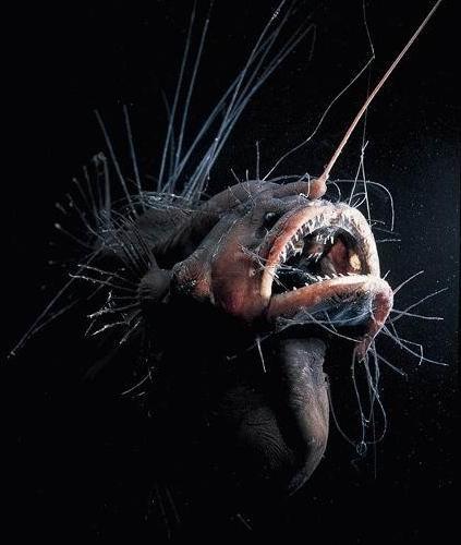 """Con người """"hạ độc"""" sinh vật ở khe nứt sâu nhất thế giới - 1"""