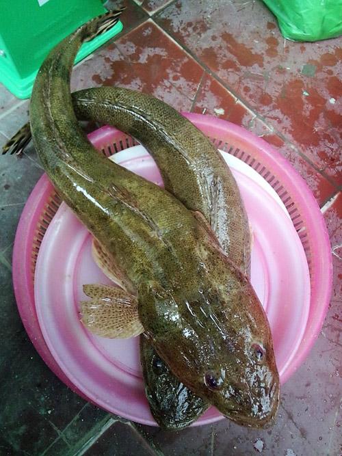 Ngày lạnh, lai rai cá chai nướng ngũ vị thơm lừng - 2