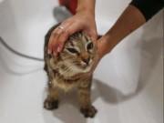 Phi thường - kỳ quặc - Khách sạn đầu tiên thế giới coi mèo như ông hoàng bà chúa