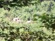 Kỳ lạ voi rừng kéo về nơi chuẩn bị lập khu bảo tồn voi