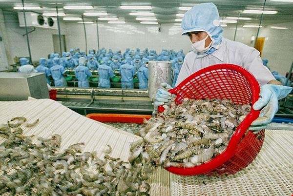 Tôm xuất khẩu sang Hàn Quốc phải chỉ định kiểm dịch - 1