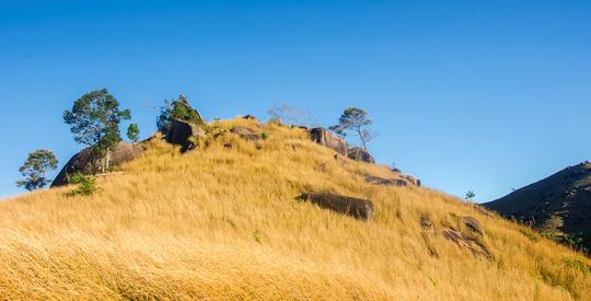 Đồi cỏ đuôi chồn óng vàng, đẹp như tranh ở Gia Lai - 3