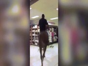 Phi ngựa vào siêu thị, đi lại dọc ngang để mua sắm